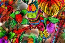 perruche du paradis von Boris Selke