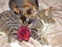 Katzen-valentinstag-2016