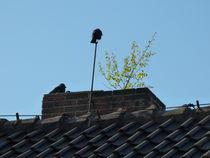 Natur-auf-dem-dach