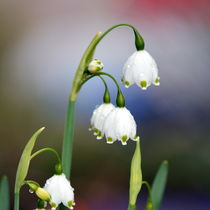 Frühlingsregen von gugigei