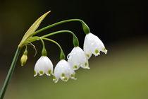 Frühlingsreigen von gugigei