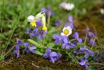bunte Frühlingszeit von gugigei