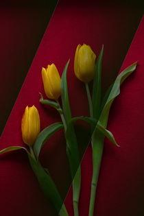 Drei Tulpen by Wladimir Zarew