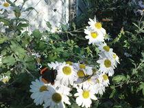 Schmetterlinge und Blumen by isma