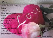 Poema de rosa / Rosengedicht by isma