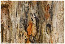 Abstrakt Nature Tree Trunk  von Sandra  Vollmann