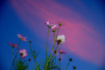 Flowers against the sky von Yuri Hope
