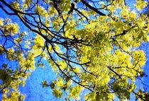 Spring Dreams - Frühlingsträume by Heidi Piirto