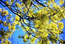 Spring Dreams - Frühlingsträume von Heidi Piirto