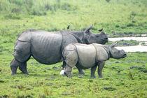 Rhino4575
