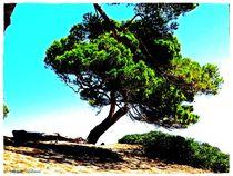 Blue Sky Pine  von Sandra  Vollmann