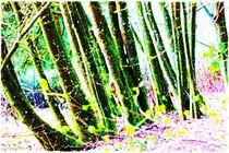 Nature Moments von Sandra  Vollmann