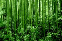 Im Bambuswald von gugigei