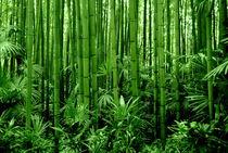 Im Bambuswald by gugigei