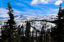 Denali-wilderness-1-of-1-1