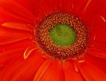 flower von Andrew Zhuykov