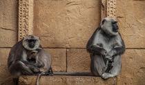 Affenfamilie von Andreas Bugla