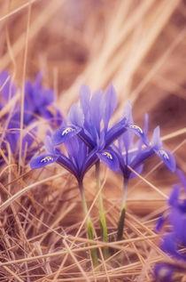 Flowers-13
