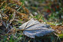 Herbst-6