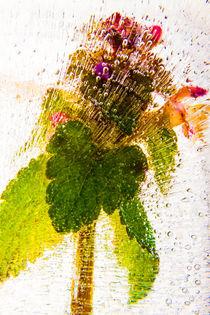 Blumen durchbrechen das Eis by Marc Heiligenstein