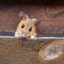 Maus - quadratisch - Mousepad by gugigei