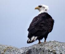 Bald Eagle Watching von Gena Weiser