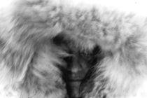 wolf by M. Kwintera