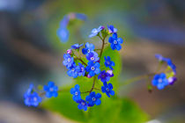 forget me not by M. Kwintera