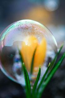 flower-ball by M. Kwintera