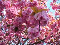 Frühlingsrausch von rosenlady