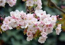 Frühlingstag von gugigei