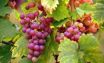 Weintrauben von gugigei