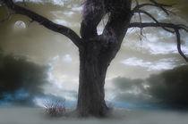Twilight Song von CHRISTINE LAKE
