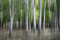 Waldwischer von hpengler