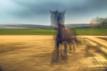 Freudiges Pferd