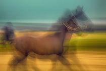 Galoppierendes Pferd von Matthias Töpfer