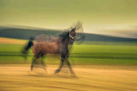 Pferd-3