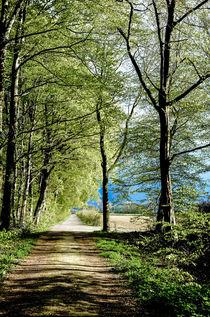Aus dem Wald von Nils Volkmer