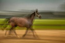 Laufendes Pferd von Matthias Töpfer
