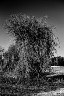 Weide von Nils Volkmer