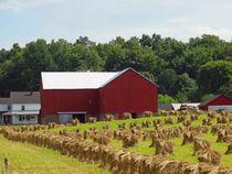 True Amish Farm by Gena Weiser