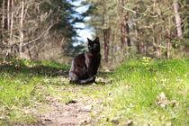 Schwarze Katze von frauherrmann