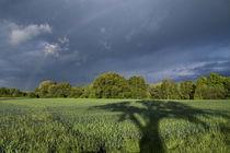 Der Schattenbaum von hpengler