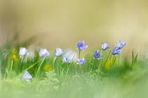 Auf der Blumenwiese by hpengler