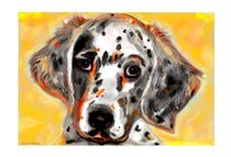 Young English Setter by Sandra  Vollmann