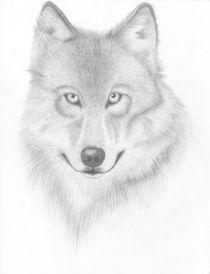Wolf gezeichnet von frauherrmann