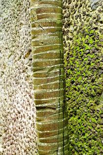 Stone and Palm von viva-imago