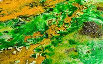 Grüne Algen von viva-imago