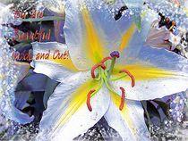 Day Lily Beauty von Gena Weiser