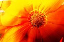 Erotic-flower-i-by-photo-artdeg-by-rosemarie-hofer-60x90